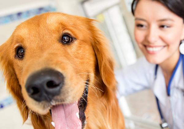 viva seguro sempre | Plano de Saúde Animal: 4 Dicas para Cuidar do seu Cachorro