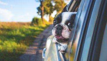 Plano de Saúde Para Pet: Saiba Como é Feita a Castração de Cachorros e Gatos